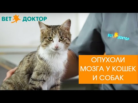 Опухоли мозга у собак и кошек