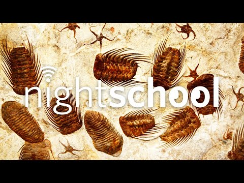 , title : 'NightSchool: The Fossil Record