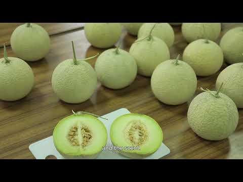 科技化的臺灣設施農業 10分鐘 英文版