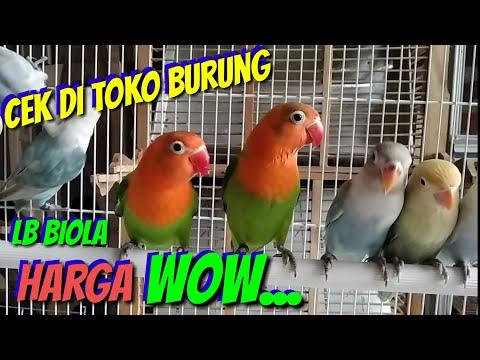 mp4 Lovebird Violet Olx, download Lovebird Violet Olx video klip Lovebird Violet Olx