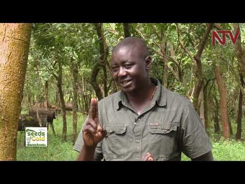 SEEDS OF GOLD: How to generate more profit from mixed farming