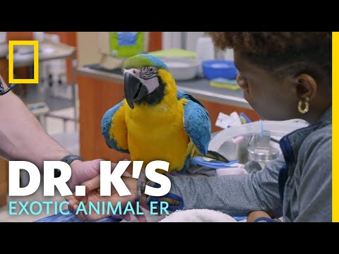 A Rescued Macaw Gets a Check-Up | Dr. K's Exotic Animal ER