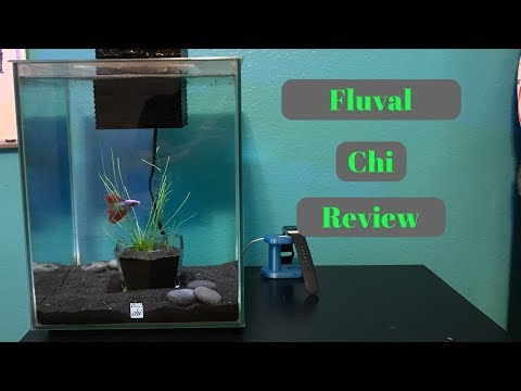 Fluval Chi 1 Year Review