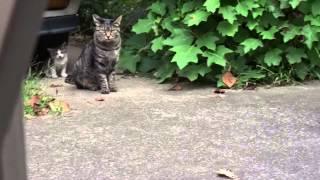 母性の薄い猫とその子猫を眺めてみた The Mother Cat And Her Kitten 2