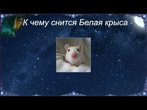 К чему снится Белая крыса (Сонник)