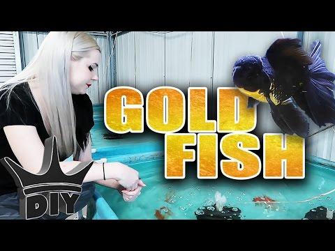 GOLDFISH AQUARIUM TOUR - Solid Gold Aquatics!