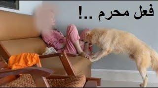 لهذا حـرّم الاسلام تربية الكلاب و اقتناؤها , صدق رسول الله ﷺ