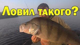 Рыбалка ловля крупного окуня на спиннинград