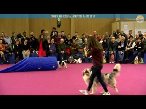 Voir la vidéo : Ring Canins du 03 mars 2017, partie 4