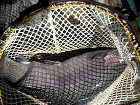 Quanto per un giubbotto di salvataggio per pesca