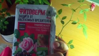Фитоверм для роз видео