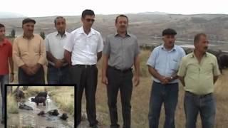 preview picture of video 'Çorum Damızlık Manda Yetiştiricileri Birliği'