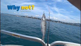 Рыбалка в сочи на катере
