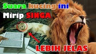suara kucing marah - TH-Clip