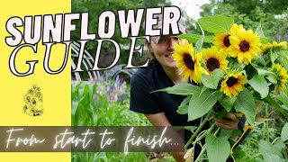 How To Grow Sunflowers From Seed - Cut Flower Gardening For Beginners