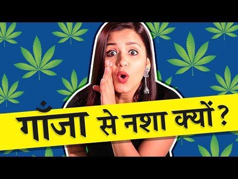 How weed works on the brain? (in Hindi) गाँजा से नशा कैसे होता है?