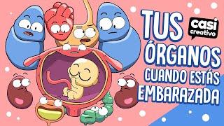 Tus órganos cuando estás embarazada   Casi Creativo