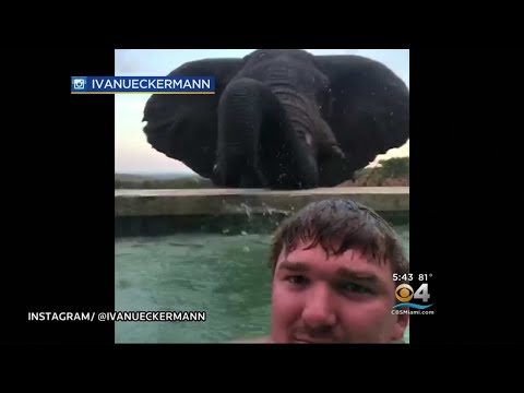 Trending: Man Captures Video With Elephant