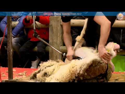 Voir la vidéo : Ring Ovins et Caprins du 05 mars 2017, partie 2
