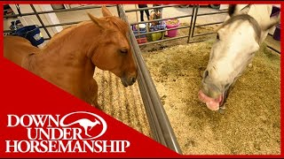 Clinton Anderson: Correcting Horses Behavioral Problems In The Stall - Downunder Horsemanship