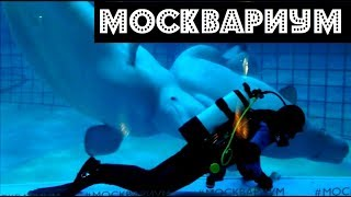 МОСКВАРИУМ | Moscow oceanarium