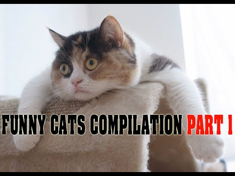 Funny cats compilation 2015 Part 1 –  Funny Animal Video – Most Ever Seen