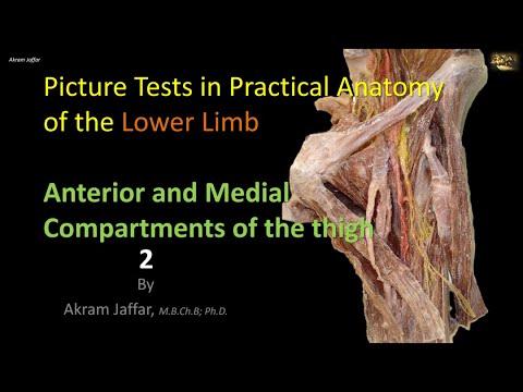 Test obrazkowy z anatomii kończyny dolnej - przednia część uda 2