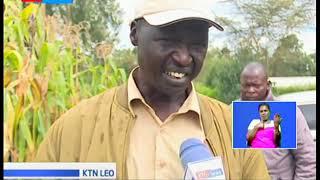 Nzige wavamia mashamba na kuaribu mazao Rongai kaunti ya Nakuru