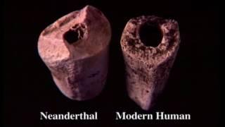 В поисках неандертальцев