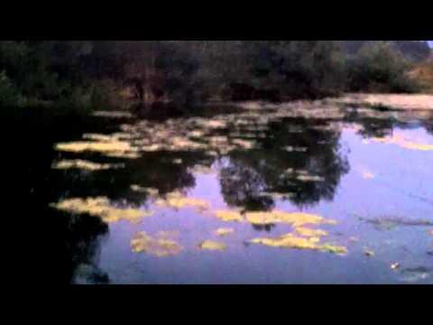 Bass Fishing Oregon Pond – Topwater Senko – And jig action.