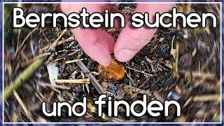 Bernstein finden - eine erfolgreiche Bernsteinsuche