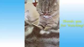 Cute Pets And Funny Animals Compilation #4   Pets Garden 54uRyjhKWmk 360p