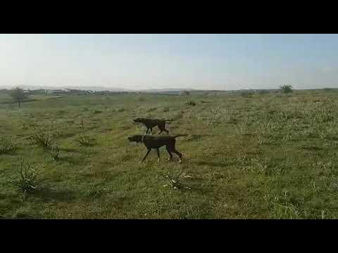 Ömür Av Köpekleri 2
