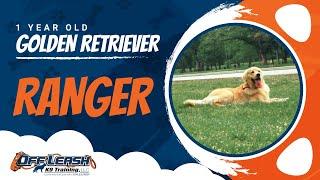 1 Year old Golden retriever Ranger | Nova Dog Training| ECollar Training |Danny Walker Trainer