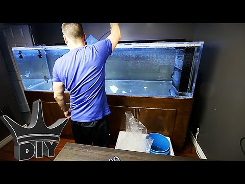 HOW TO: add new fish to your aquarium