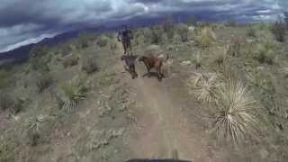Taking the dogs for a ride in Ute Valley.