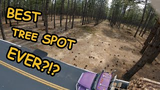 ONLY ONE PACK AT THE BEST TREE SPOT EVER !! (FPV FREESTYLE)
