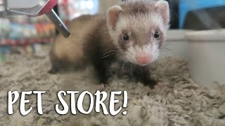 LOOKING AT FERRETS IN THE PET STORE!
