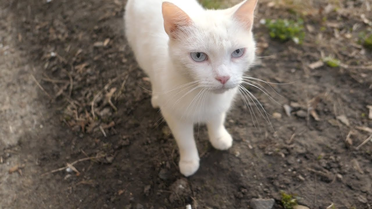 White cat is afraid of me but stray dog is not afraid of me