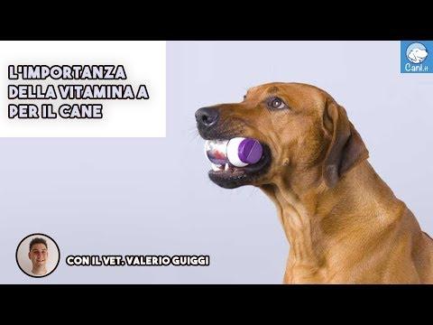 L'importanza della vitamina A per il cane
