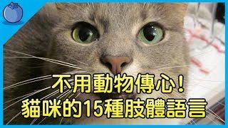 【貓奴必看 】貓咪的15種肢體語言,學會就不用找動物傳心師了|原來低吼代表…|藍莓豆花 Blueberry Tofa