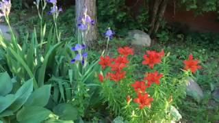 В том саду, где...