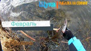 Сезон рыбалки на щуку в беларуси