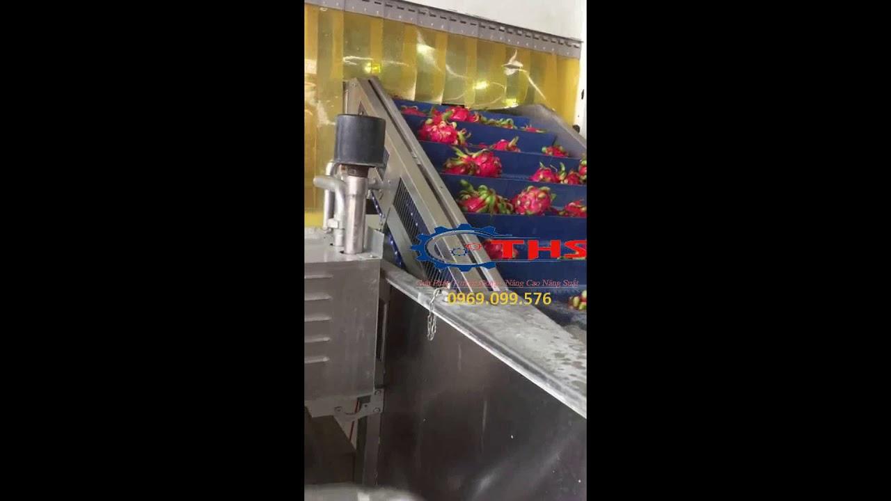 Băng tải nhựa dây chuyền rửa trái cây