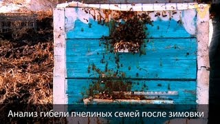Смотреть онлайн Советы начинающему пчеловоду: почему гибнут пчелы