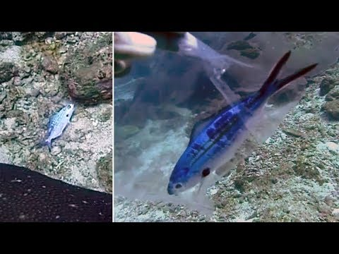 Diver Rescues Tiny Fish Stuck Inside Plastic Bag