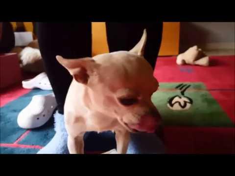 Чем помочь собаке при легком отравлении