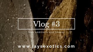 Vlog #3 New Additions and Snakes