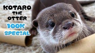 【10万人記念】もっとすごいカワウソコタローの名作を一気に見せます! 100K SUB SPECIAL! Kotaro the Otter Best Memories
