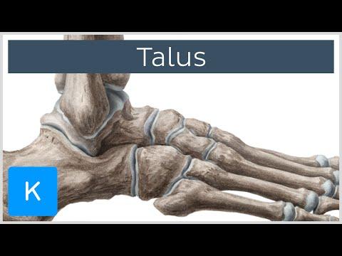 Artroza articulației de gradul I